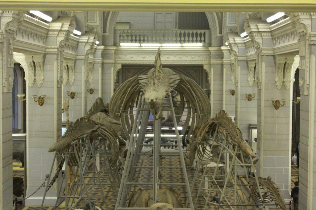 Museos de San Petersburgo. Zoológico